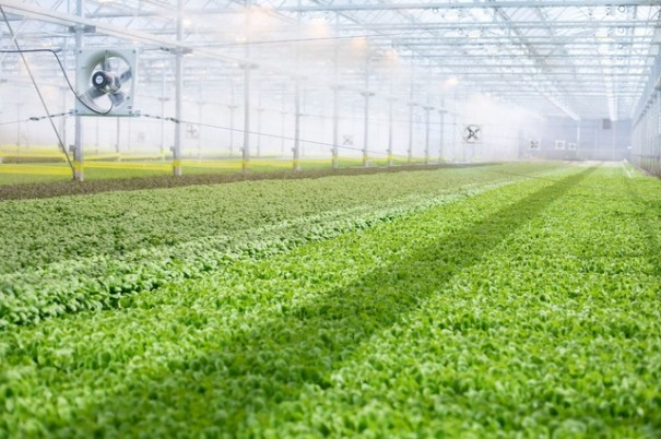 BrightFarms' seven-acre greenhouse will produce more than 2 million pounds of locally grown produce for supermarkets in the region